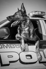 Dog Leaning out Window of Police Cruiser